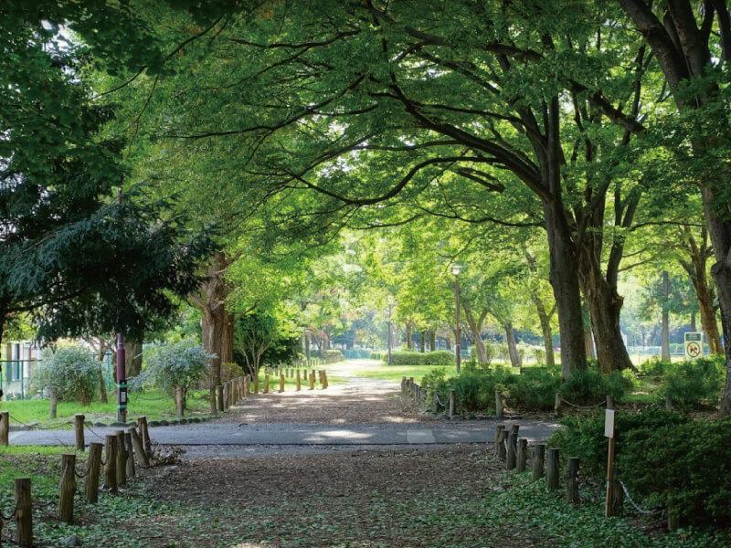 現地から10程度歩くと緑豊かな緑地も|善福寺川緑地|日神デュオステージ浜田山
