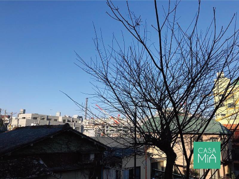 バルコニーからの眺望|パインクレスト信濃町