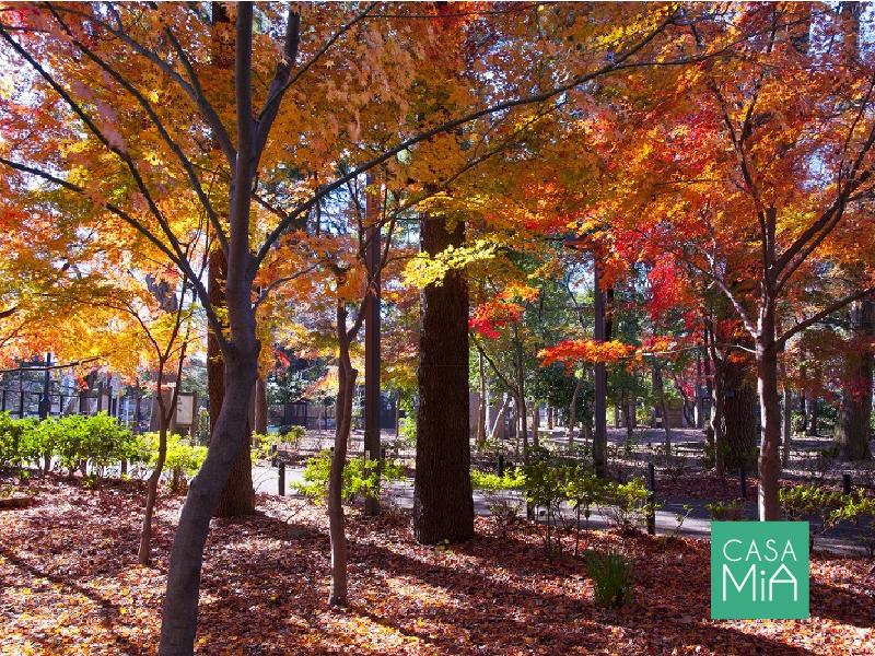 豊かな自然が魅力で人気の癒しスポット「林試の森」|アークス武蔵小山